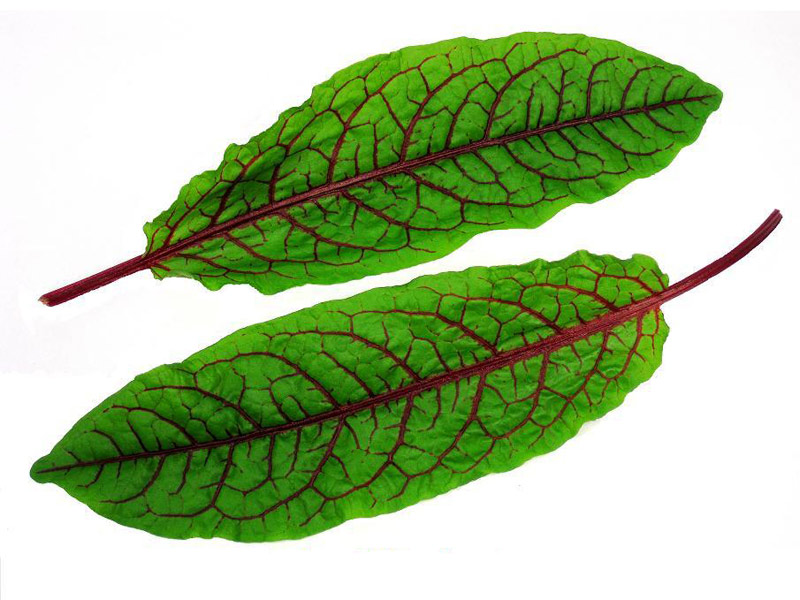 Specialty Produce Mixed Exotic Leaves Exotic Leaves Growing In Lynnfield Ma